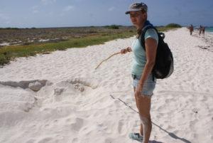 LaVida Curacao Seaturtle Conservation Curacao, Sabine Berendse